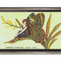 1920s Flapper Girl Butterfly Morpho Achilles Fantasy Belt Buckle Sturdy Metal Photo