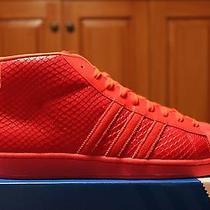 Adidas Pro Model Red Photo