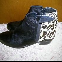 Ankle Boots Photo