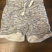 Baby Gap Shark Shorts Size 3t Photo