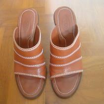 Beautiful Tod's Ladies Shoes Photo