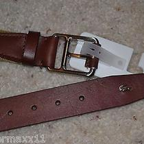 Brand New Lacoste Stretch Knit Brown/tan Fabric Belt Men's Size Large Photo