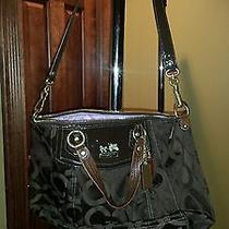 Brown Coach Madison Op Art Sateen Claire Photo