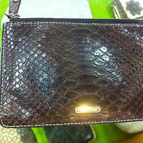 Celine Brown Snakeskin Brown Clutch  Photo