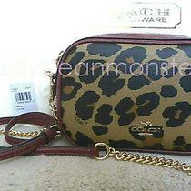 Coach 39587 Isla Chain Leopard Canvas Crossbody Clutch Camera Bag Purse Natural Photo