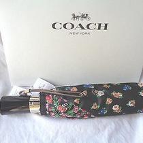 Coach 59246 Tea Rose N Posey Cluster Standard Umbrella Folding Black Strawberry Photo