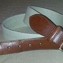 Coach Belt 34