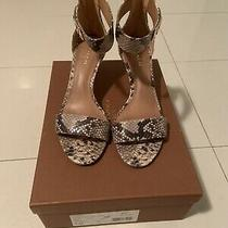 Coach Marielle Natural Print Snake Womens Sandals Size 7 Photo