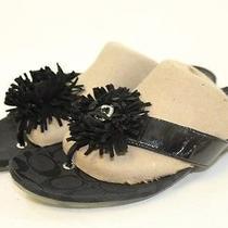 Coach Mismatch 8.5 / 8 Womens New Suki Black Leather Sandals Flip-Flops Shoes El Photo