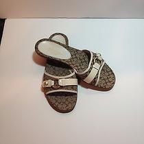 Coach Slippers Photo