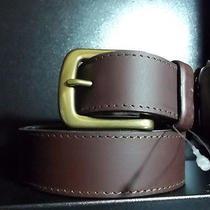 Dickies Brown Belt Photo
