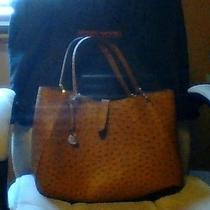 Dooney and Bourke Large Camilla in Natural Ostrich Photo
