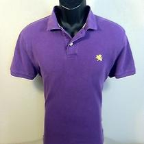 Express Mens S/s 100% Cotton Solid Purple Polo Shirt Size M Euc Photo