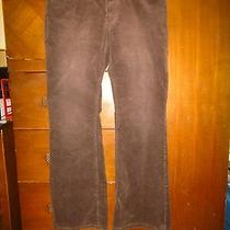 Express Wemens Brown Pant's  Photo