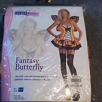 Fantasy Butterfly Size Medium Photo