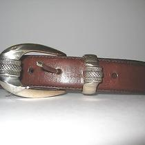 Fossil Belt Brown S  Photo