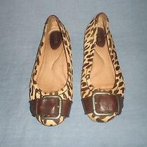 Fossil Calfskin/  Leather Flats With  Big Buckle Size 8 Photo