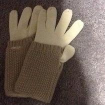 Fossil Gloves Photo