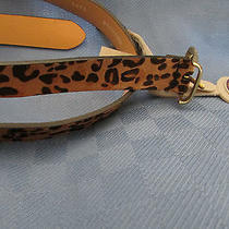 Fossil Leopard Print Genuine Leather Belt Large Nwt  L Photo