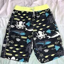 Gap Kids Boys Swim Shorts Trunks Xl 12 Shark Swimsuit  Photo