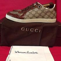 Gucci Low Tops Photo
