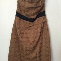 h&m Brown Floral Scalloped Lace Black Trim Dress Strapless Fitted Size 12 Photo