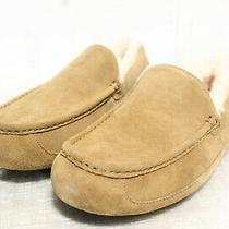 Ie-112 Men's Ugg Ascot Slipper Size 13d Photo