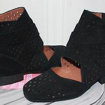 Jeffrey Campbell Almayo Laser Cut Black Suede Zip Up Booties Size 8 New Photo