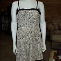 Kensie Lace Enconter Dress Nwt Size 10 Photo