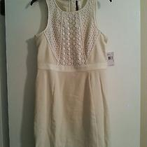 Kensie Off White Dress Size Medium Photo