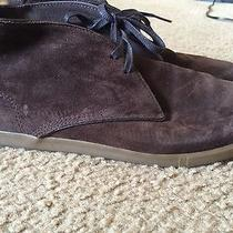 Lacoste Brown Shoes Photo