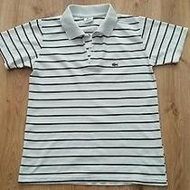 Lacoste Man Polo Shirt Size Medium Photo
