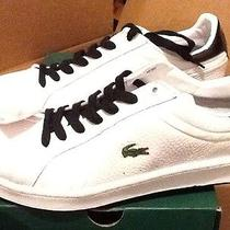 Lacoste Original Shoes Size 12 Photo