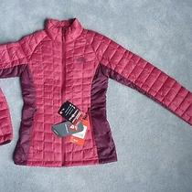 Ladies the North Face Thermoball Sport Rumba Red / Fig  Quilted Jacket Size Xs Photo