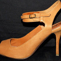 Lanvin 895 Nib Camel Iguana Embossed Strappy Sandals 41 Photo