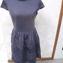 Lc Lauren Conrad Blushing Blooms-Gray -Lace Stripe Skater Knit Dress-Size-14-Nwt Photo