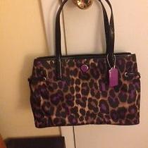 Leopard Print Coach Bag Photo