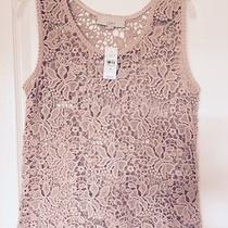 Loft Beautiful Blush Color Lace Top New With Tags Size Medium Photo