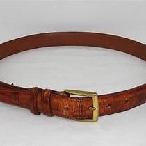 Men's Brighton Brown Leather Maui Croc Embossed Belt Sz 34 Photo
