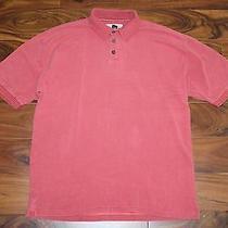 Men'sredtommy Bahama Polo Shirtl Photo