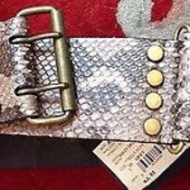 New Lanvin Taupe Snake Belt Tags 1490 Great Gift Medium Photo