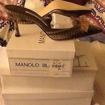 New Manolo Blahnik With Box Photo