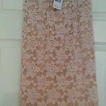 New Sz S 78 Free People Everything Rosey Pencil Skirt Stretch Lace Blush Pink  Photo