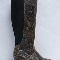Nwob Lane Bryant Snakeskin Low Wedge Knee High Boots Sz 12w Photo