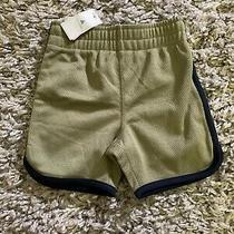 Nwt Baby Gap Boys Mesh Athletic Shorts Sz 12-18 Mon Army Green Navy Blue Photo