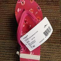 Nwt Coach Clementine Dahlia Thong Flip Flop Sandal 7 Shoe Flats Women's  New Photo