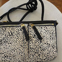 Nwt- Fossil Beautiful Popular Designer Crossbody/shoulder Leather  Bag Photo