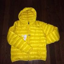 Nwt Lacoste Yellow Jacket Zeste L Large Mens Size 54 Down Coat Light Puffer 275 Photo