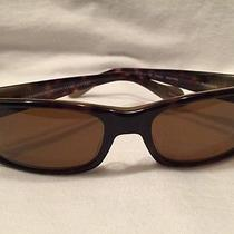 Oliver Peoples Primo Color 362/horn With Java Polar  Photo