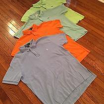 Polo & Lacoste Shirt Lot  Photo
